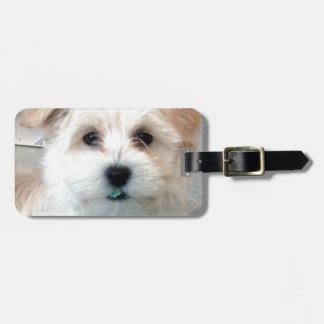 Havanese Rescue Puppy Tan funny green 'tooth' Luggage Tag