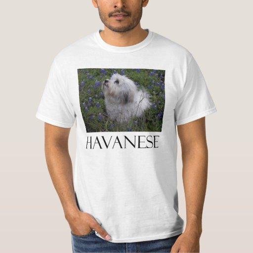 HAVANESE TEE SHIRTS