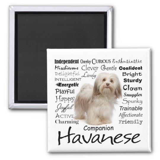 Havanese Traits Magnet
