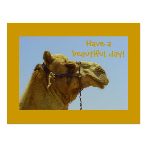 Have a beautiful day - camel postcard