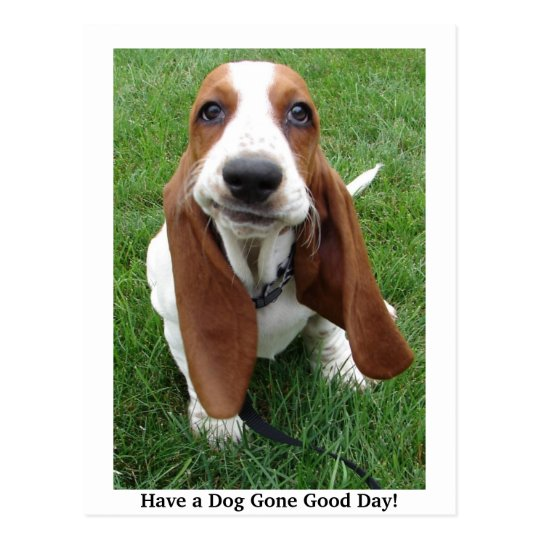 Have a Dog Gone Good Day! Postcard