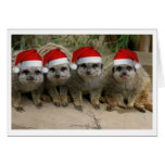 Have a Meerkat Christmas! Cards