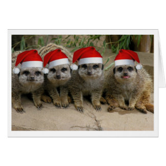 Have a Meerkat Christmas! Greeting Card