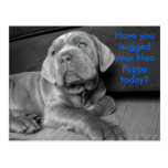 Have you hugged your Neo Puppy today? Postcards