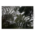 Hawaii, Big Island, Hawaii Volcanoes National Greeting Card