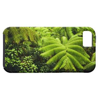 Hawaii, Big Island, Lush tropical greenery in 2 iPhone 5 Cases