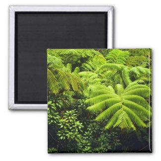 Hawaii, Big Island, Lush tropical greenery in 2 Magnet