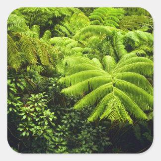 Hawaii, Big Island, Lush tropical greenery in 2 Square Sticker