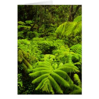 Hawaii, Big Island, Lush tropical greenery in Card