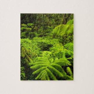 Hawaii, Big Island, Lush tropical greenery in Puzzle
