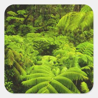 Hawaii, Big Island, Lush tropical greenery in Square Stickers