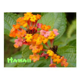 Hawaii Flower Postcard