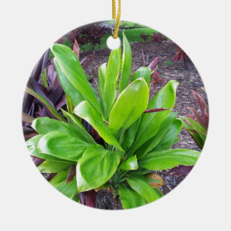 Hawaii Good Luck Plant Round Ceramic Decoration