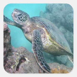 Hawaii Green Sea Turtle Square Sticker