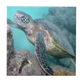 Hawaii Green Sea Turtle Tile