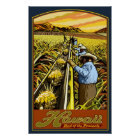 Hawaii Islands - Pineapple Harvest Travel Poster