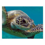 Hawaii Islands Sea Turtle Poster