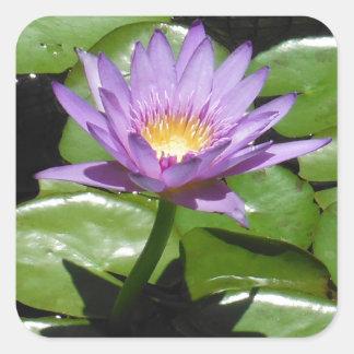 Hawaii Lotus Flower Square Sticker