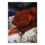 Hawaii Octopus Cards