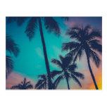 Hawaii Palm Trees At Sunset Postcard
