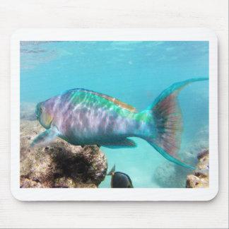 Hawaii Parrot Fish Mouse Mat