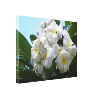Hawaii Plumeria Canvas Print