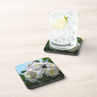Hawaii Plumeria Coaster