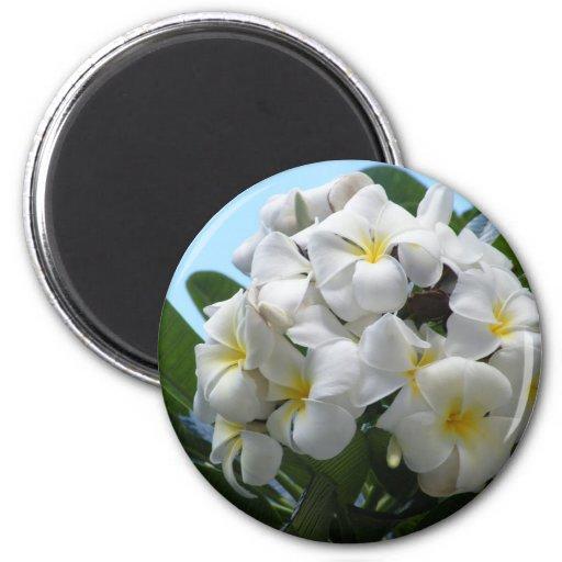 Hawaii Plumeria Flower 6 Cm Round Magnet