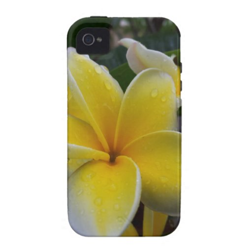 Hawaii Plumeria Flowers Case-Mate iPhone 4 Covers