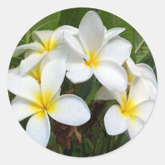 Hawaii Plumeria Flowers Classic Round Sticker