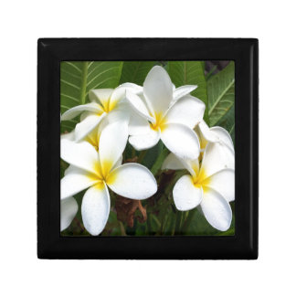 Hawaii Plumeria Flowers Small Square Gift Box