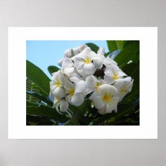 Hawaii Plumeria Poster