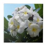 Hawaii Plumeria Tile