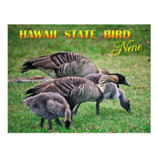Hawaii State Bird - Nene or Hawaiian Goose Postcard