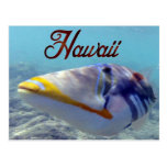 Hawaii State Fish - Humuhumunukunukuapua'a
