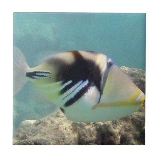Hawaii State Fish - Humuhumunukunukuapua'a Small Square Tile