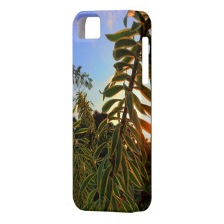 Hawaii sun sets behind Song of India iPhone 5 Covers