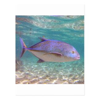 Hawaii Trevally Fish Postcards