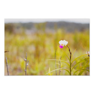 Hawaii Tropical Orchid Volcanoes National Park Poster