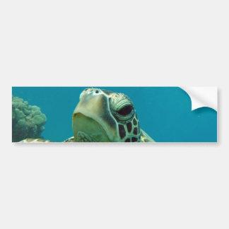 Hawaii Turtle Honu Bumper Stickers