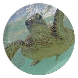 Hawaii Turtle Plate