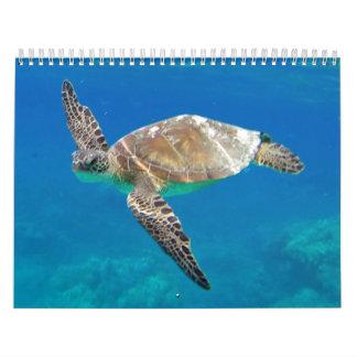 Hawaii Turtles Calendar