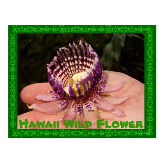 Hawaii Wild Flower Postcard