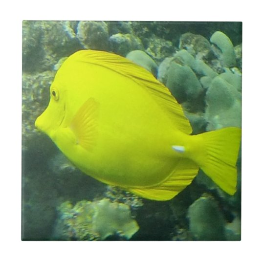 Hawaii Yellow Tang - Lau'i Pala Tile
