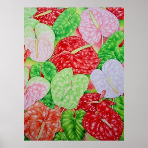Hawaiian Anthuriums Poster