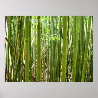 Hawaiian Bamboo Poster