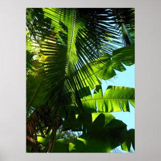 Hawaiian Banana and Coconut Trees Poster