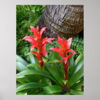 Hawaiian Bromeliads Poster