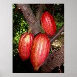 Hawaiian Cacao Pods Print