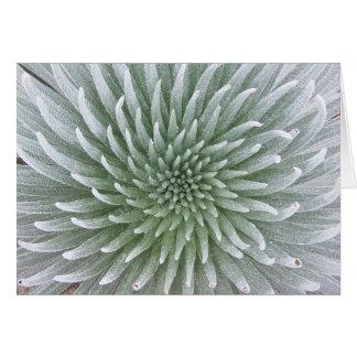 Hawaiian Cactus Succulent Note Card